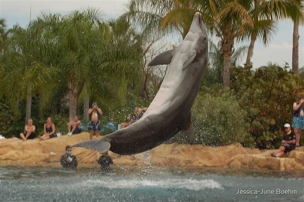 Jump Dolphin Jump! by Jessica-June Boehm