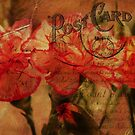 Red Carnation Post Card  by flashcompact