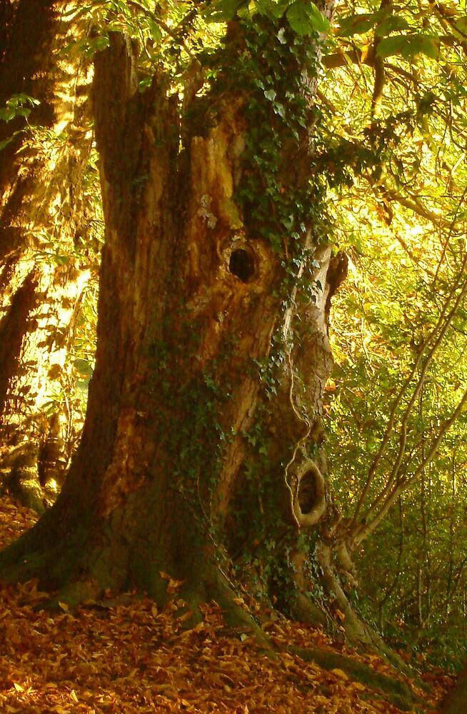 Tree Man  by Kate Towers IPA