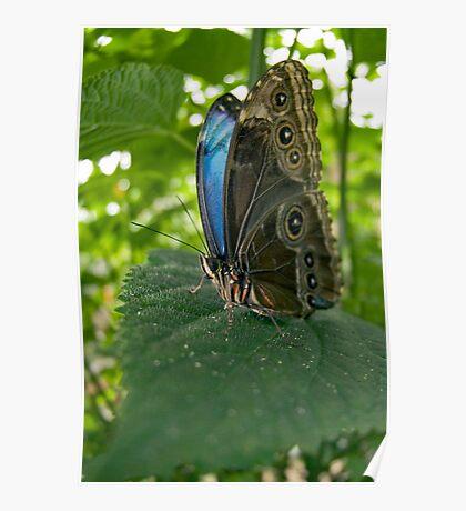 Fisheye Butterfly Poster