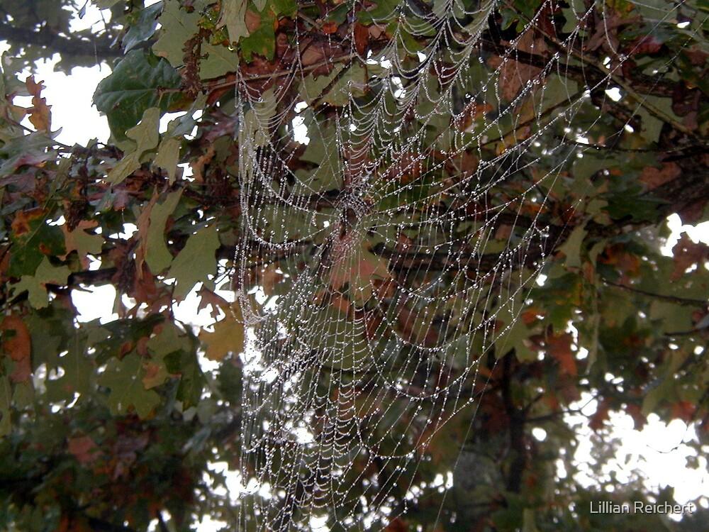 Dew on a Spider Web by Lillian Reichert