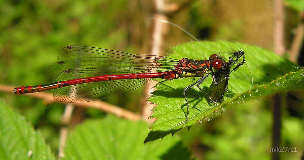 darter by mik27rc1