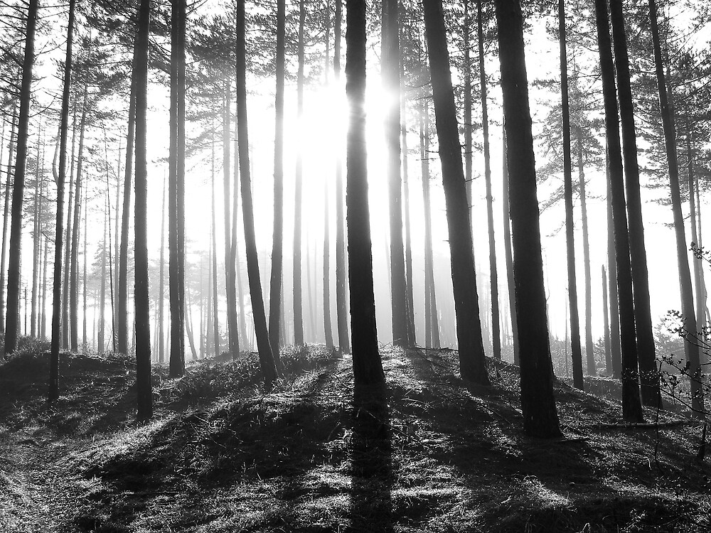 Woods - Pembrey, Wales by Biscuitboss
