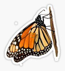 Monarch Butterfly closeup on a twig II Sticker