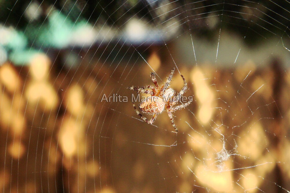 HomeSweetHome by Arlita Marie Moles
