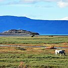 Peaceful Afternoon in El Calafate by Alessandro Pinto