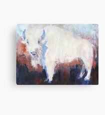White Buffalo of Peace Canvas Print