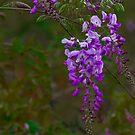 Lovely in Purple by Janice Carter