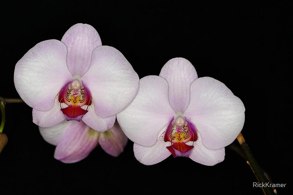 Orchid 2 by RickKramer