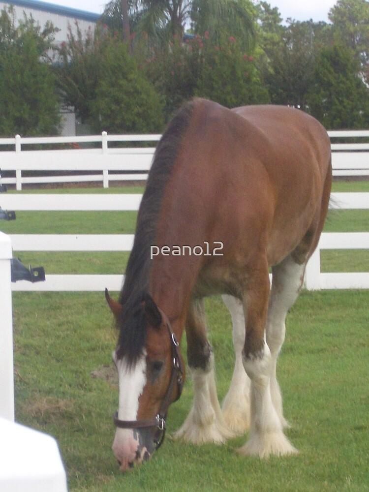 Horses by peano12
