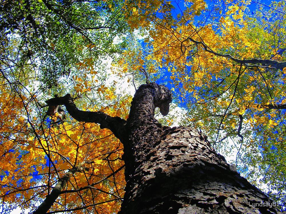 Up a tree  by Lyndsay81