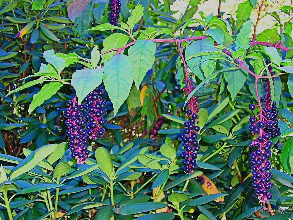 Poison Berry by Lyndsay81