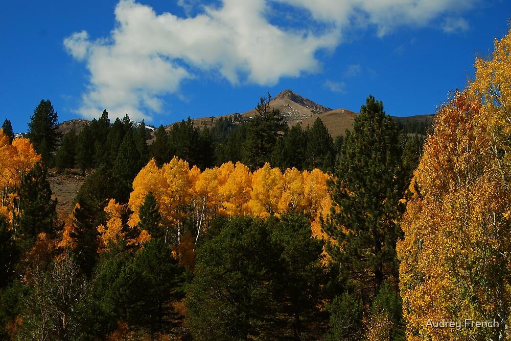 Beautiful Fall Foliage  by Audrey French