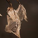 Ghost Leaves by Donna Ridgway