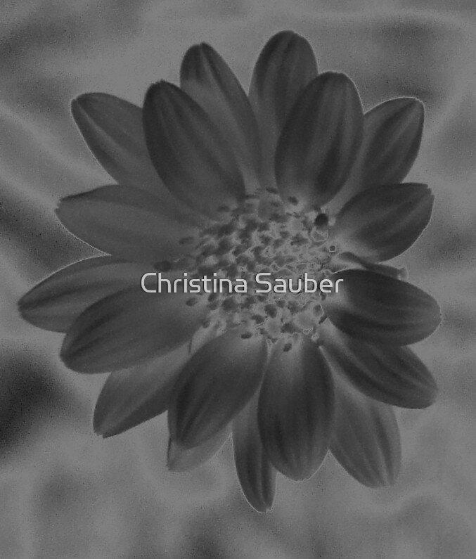 Daisy by Christina Sauber