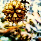 tall poppy 2 by mitty