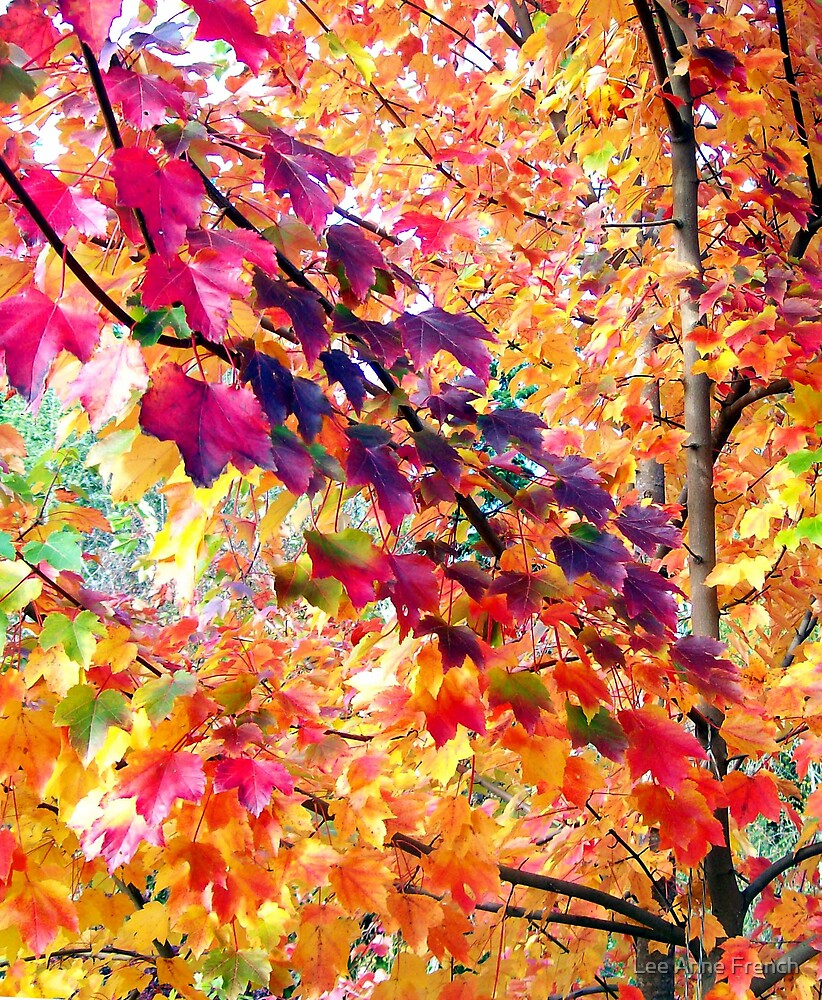 October Glory by Lee Anne French