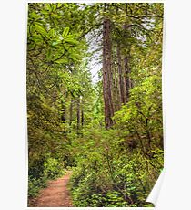 Redwoods Trail Poster