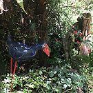 The secret garden.....!! by Roy  Massicks