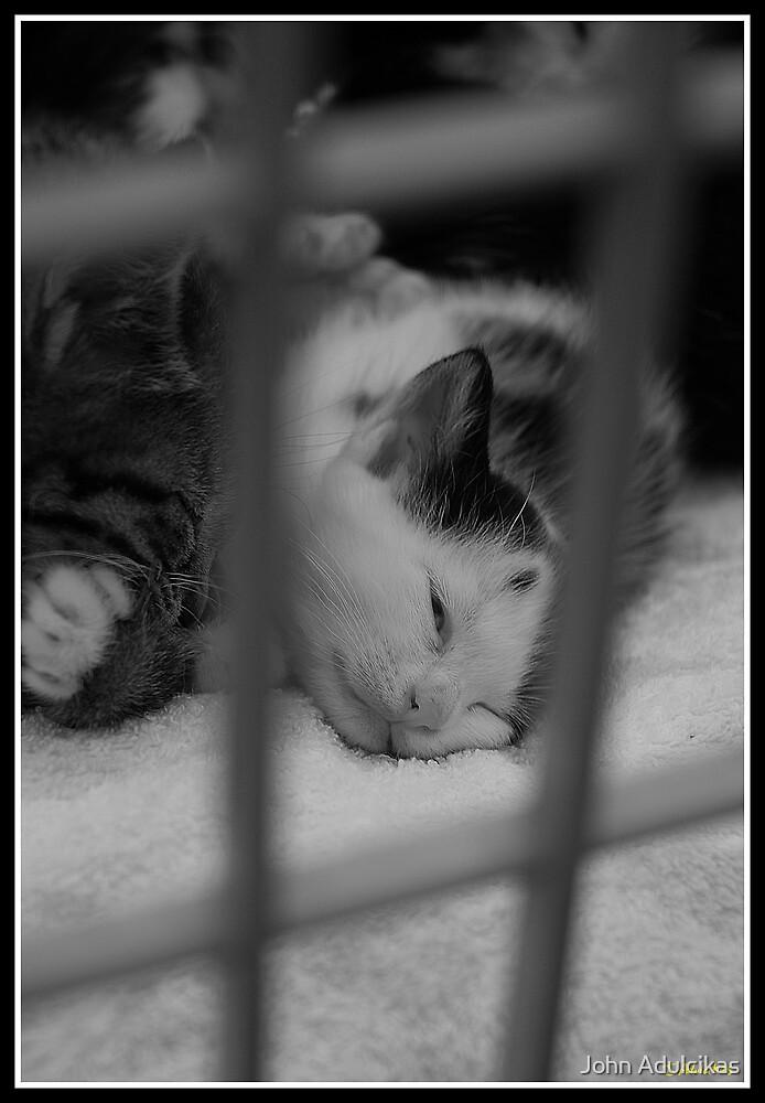 Caged cat by John Adulcikas