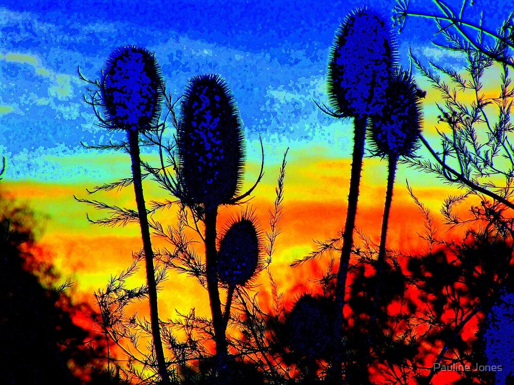 Teasles at Dawn by Pauline Jones