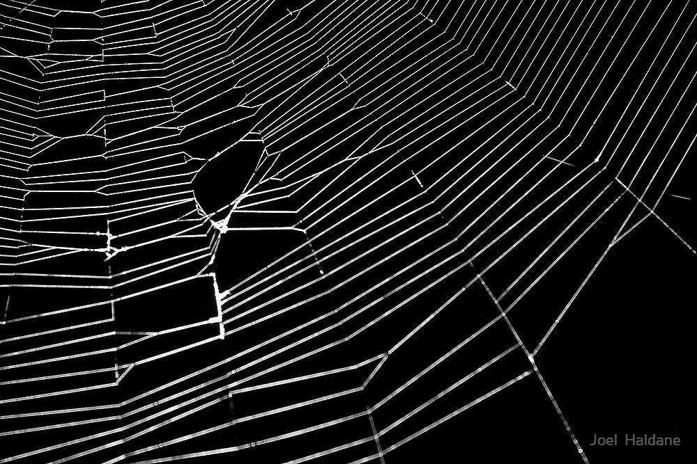 Tangled Web by Joel  Haldane