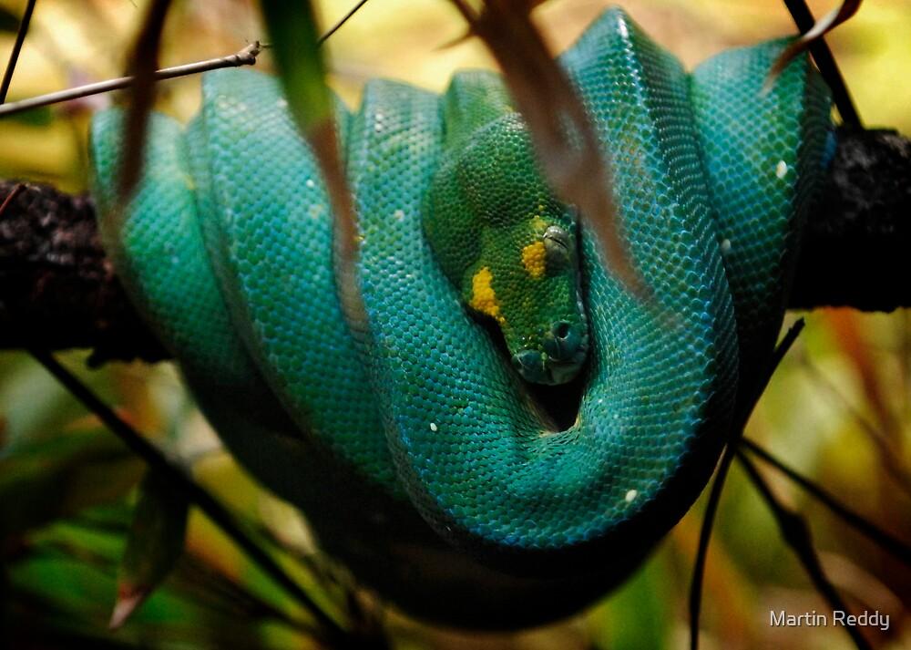 Snake by Martin Reddy