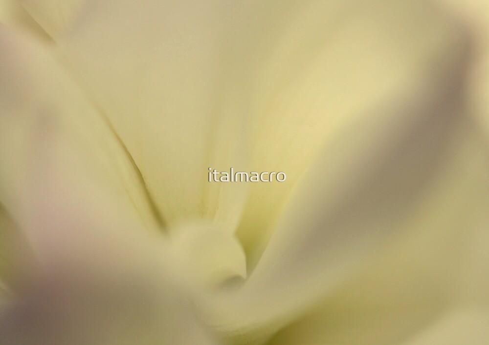 enveloping by italmacro