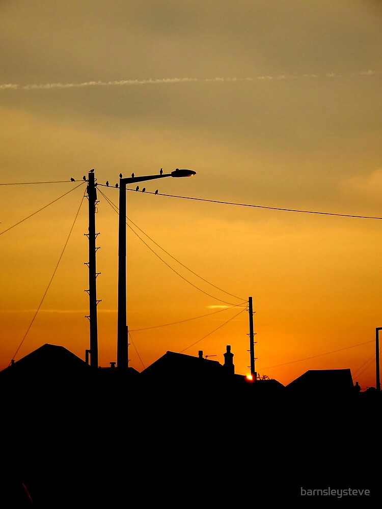 birds on a wire by barnsleysteve
