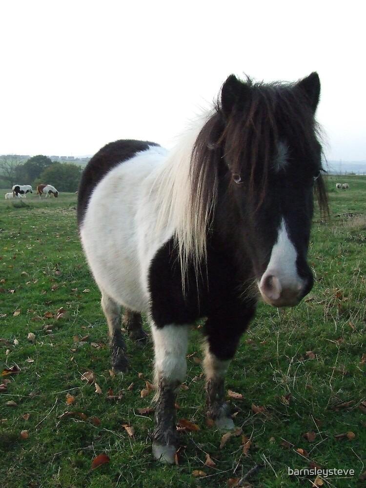 Pony on his owny by barnsleysteve