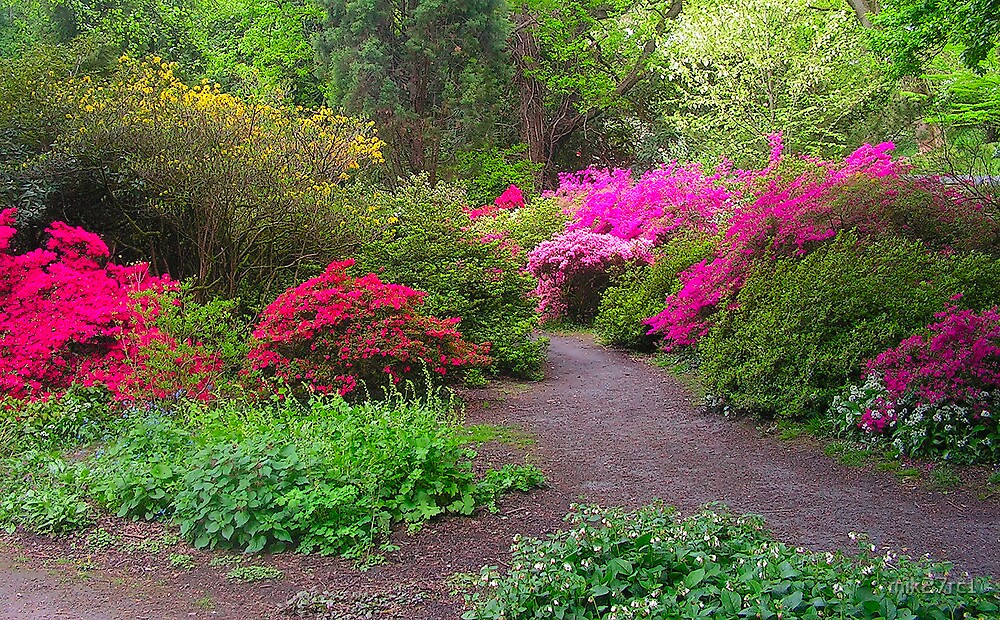 clyne garden by mik27rc1