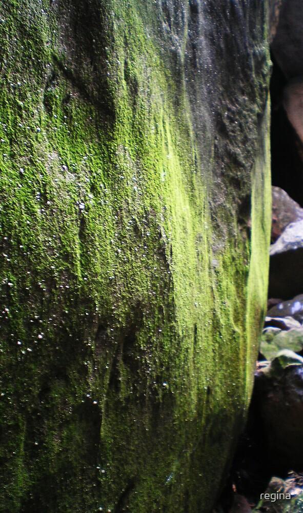 moss wall by regina