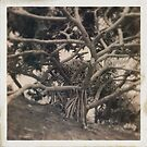 Tree by ADMarshall