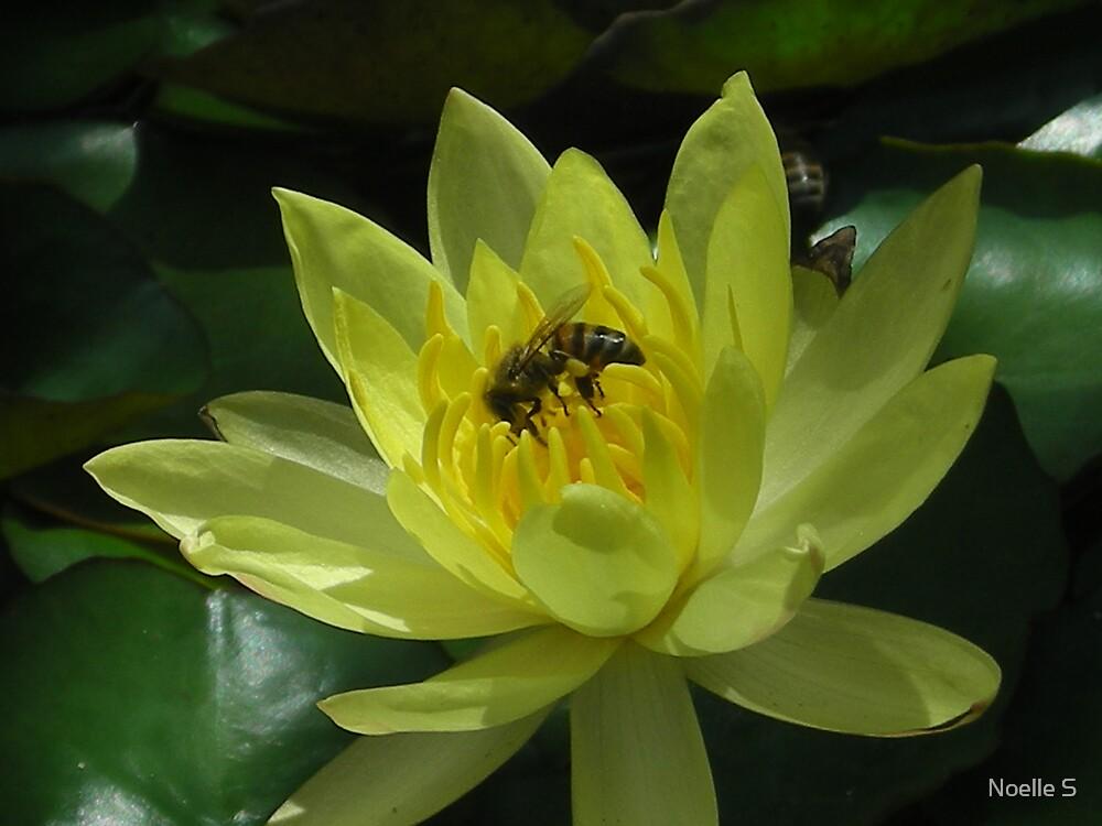 Pollen Needed by Noelle S