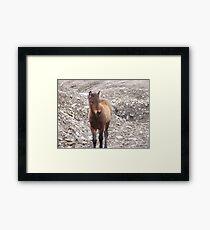 Foal Framed Print