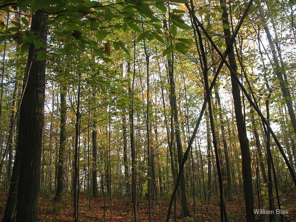 Autumn Forest by William Blair