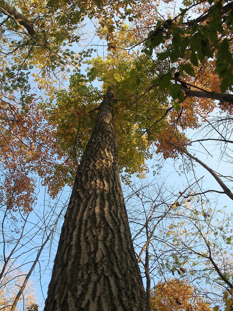 Autumn Tree by William Blair