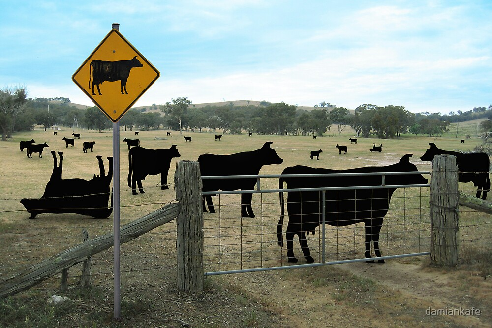 cows in the paddock by damiankafe