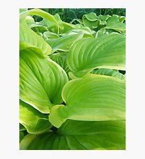 Vegetation Photographic Print