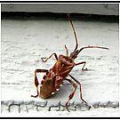 Beetle Bug by Danielle Morin