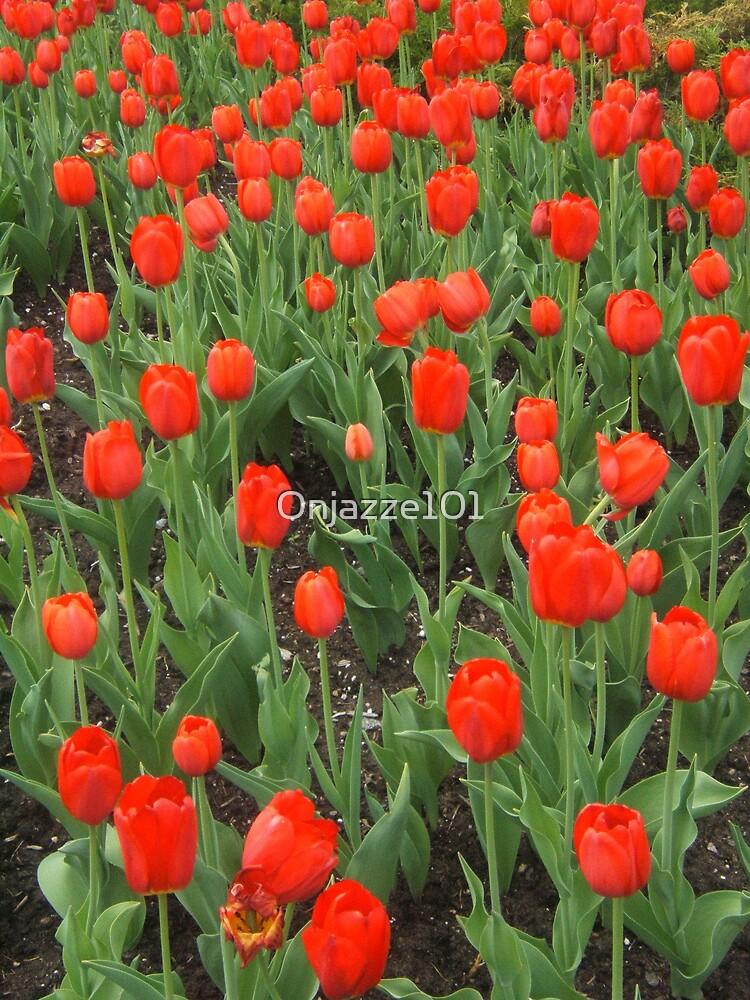 Parterre de tulipes by Onjazze101