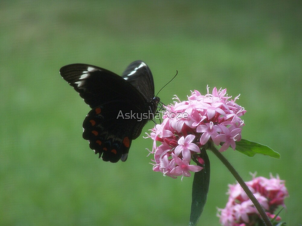 Pretty Butterfly by Kylie  Metz