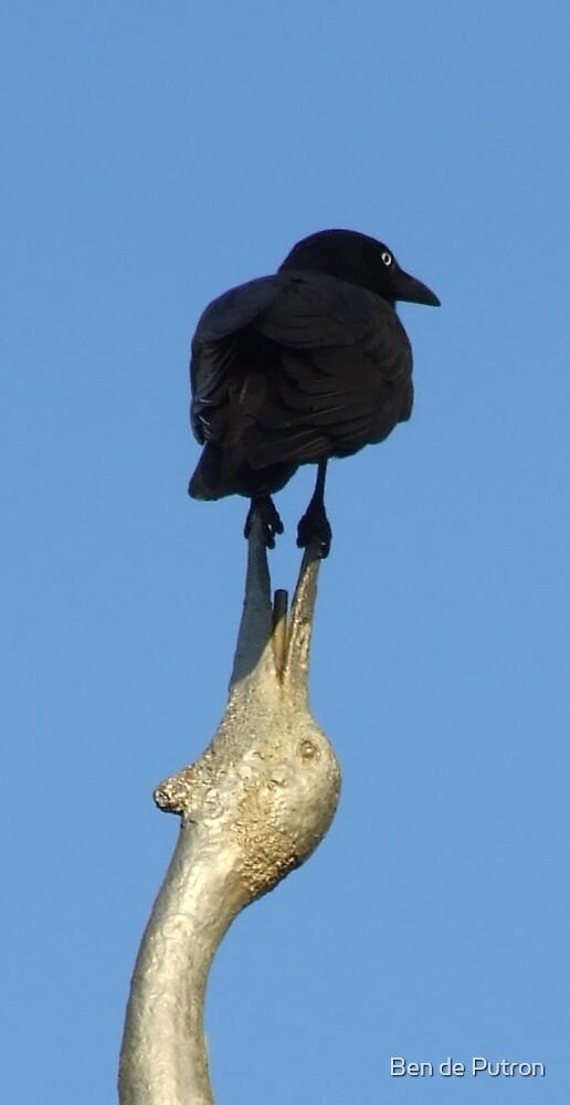 Bird on Bird Action by Ben de Putron