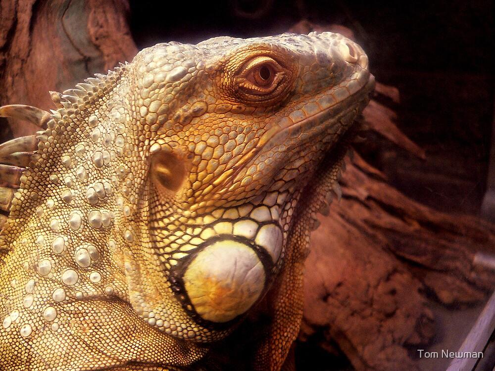 Iguana by Tom Newman