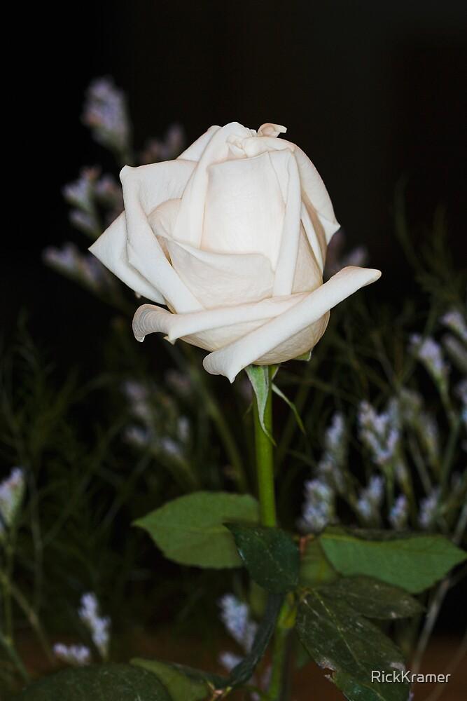 Rose 2 by RickKramer