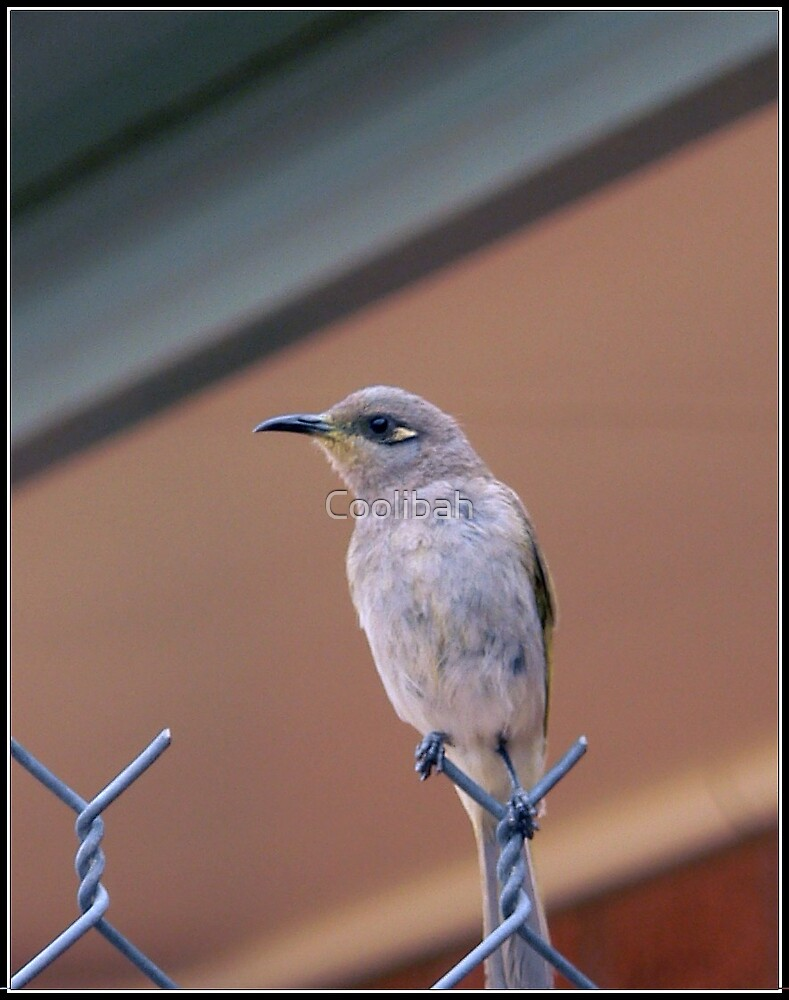 Bird on a wire  by Coolibah