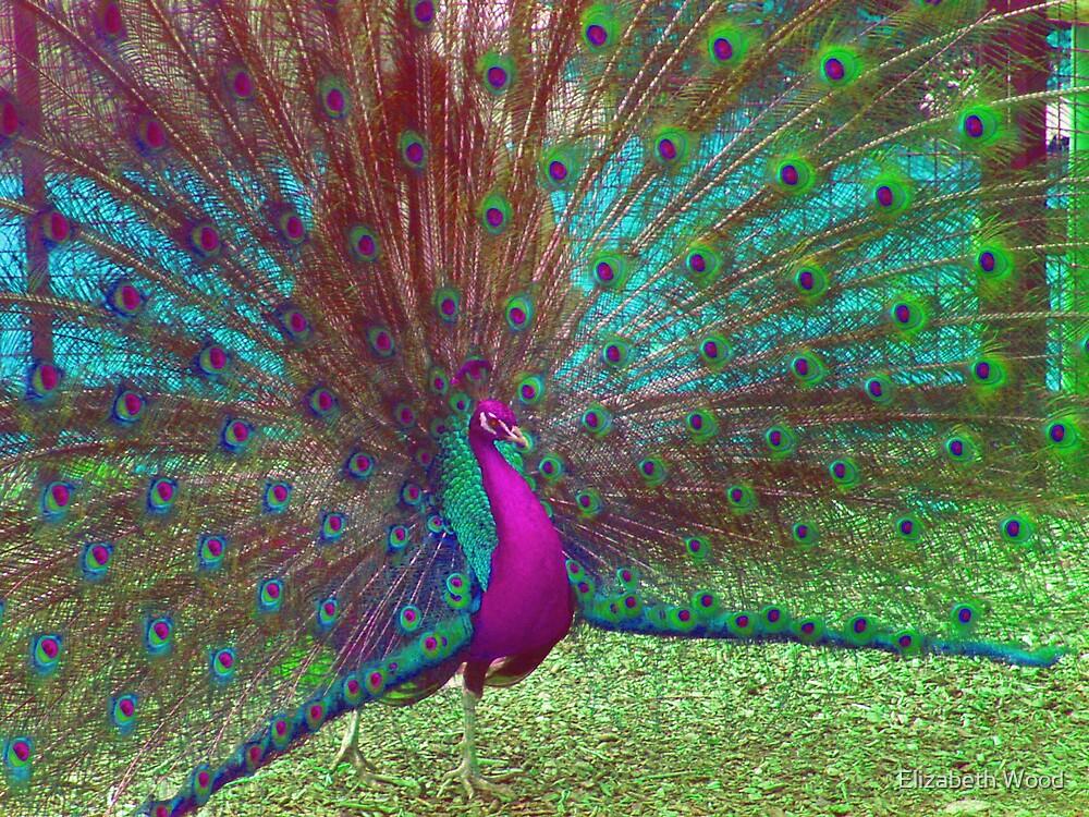 Peacock by Elizabeth Wood