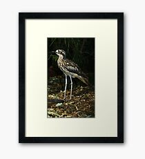 Bush thick knee. Framed Print