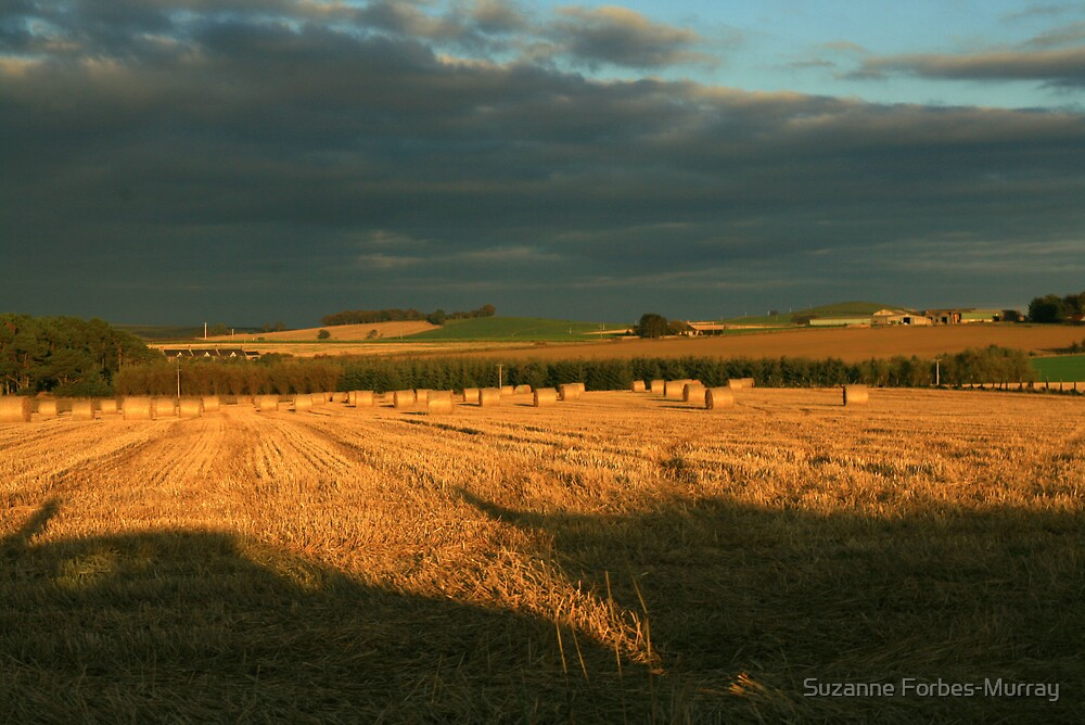Fields in Evening Sun by Suzanne Forbes-Murray