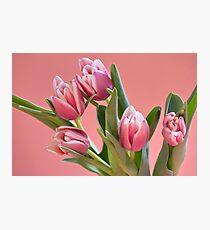 bouquet Beautiful Tulips pink color Photographic Print
